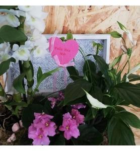 Ramo de flores Xique Xique com Anastácias, Antúrios e Proteias